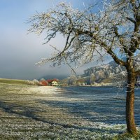 и в декабре цветут сады :: Elena Wymann