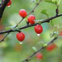После дождичка :: Наталия Григорьева