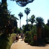 Испания. Каталония.В ботаническом саду. :: Владимир Драгунский