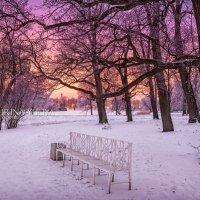 Скамейка и розовый вечер :: Юлия Батурина
