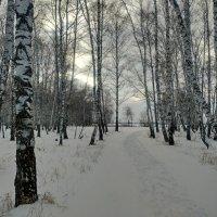 Зимнее утро в лесу :: Владимир Зыбин