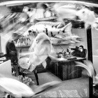 В одном офисе. :: Ирина Токарева