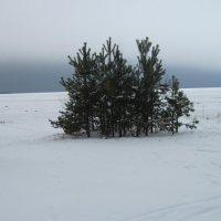 Пляж Финского залива. Декабрь :: Маера Урусова