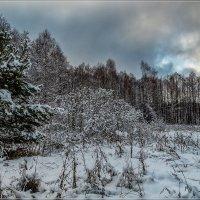 Зима в Подмосковье 3 :: Андрей Дворников