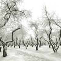 Танцующие деревья в Коломенском :: Леонид leo