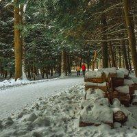 Прогулки по зимнему парку :: юрий поляков