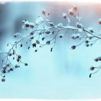 зима пришла... :: Эльмира Суворова