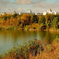 озеро на окраине Гомеля :: Александр Прокудин