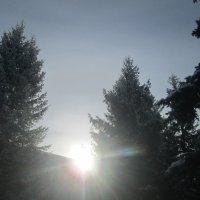 Снег и голубые ели)) :: Алексей Кузнецов