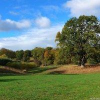 Осень в парке :: Nina Yudicheva