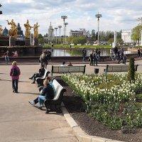 первые цветы :: Олег Лукьянов