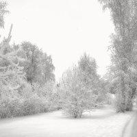 А за городом зима, зима, зима... :: Анатолий. Chesnavik.