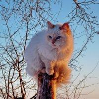 С высока любую дичь видать лучше :: Светлана Рябова-Шатунова