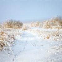 Холодная нежность... :: Александр Никитинский