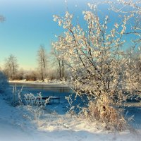Снежность... :: Нэля Лысенко