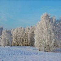 Морозный день в Пермском крае :: Алексей Сметкин