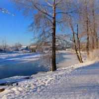 И зимний луч согреет  тополя... :: Нэля Лысенко