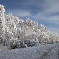 Январский пейзаж :: Михаил Пахомов