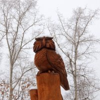 Мудрая сова. :: Люба