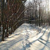 Какая погода на Спиридона-Солнцеворота, такая и на Новый год будет! :: Андрей Заломленков