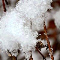 Снежинки легкие ложась... :: Михаил Столяров