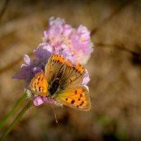 про рыжих бабочек...4 :: Александр Прокудин