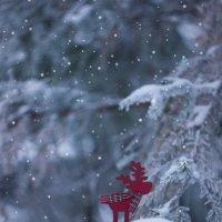 В лесу. :: Маргарита Си