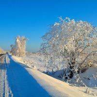 Зима. :: Александр Зуев