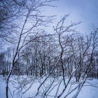 Зима в Коломенском :: Игорь Герман