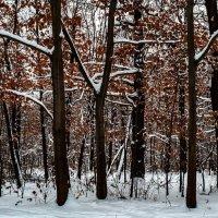 Новогоднее убранство зимнего леса, :: Николай Кондаков