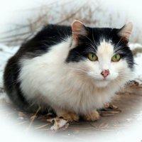 Разговаривать с кошкой — это не паранойя. Паранойя — это когда боишься при кошке сболтнуть лишнего.. :: Андрей Заломленков
