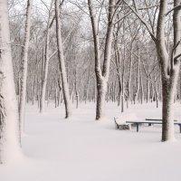 Снегом белым-белым... :: Анна Владимировна
