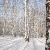 Белая зима в белой роще... :: Анна .