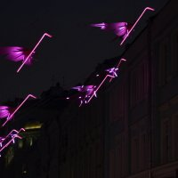 Зимовка фламинго на Рождественке... :: Наташа *****