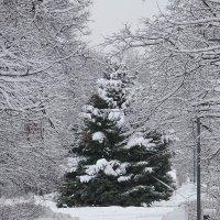 Зима в парке :: Ирина Via