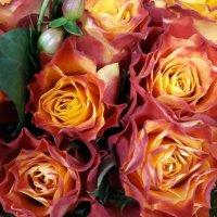 Розы всегда красивы, будьте тоже красивы, дарите тепло и внимание друг к другу! :: Anna-Sabina Anna-Sabina