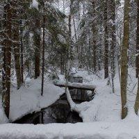 ..а всё таки зима существует.)) :: tipchik