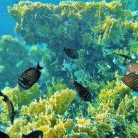 Коралловые Сады бухты Пенси-Утопия... :: Sergey Gordoff