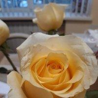 Розы всегда радуют, давайте мы тоже будем друг друга радовать: добрым словом, вниманием!!! :: Sabina