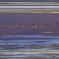 фламинго на Лагуне-Колорадо :: Георгий А