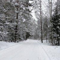 По зимнему лесу (из поездок по области) :: Милешкин Владимир Алексеевич