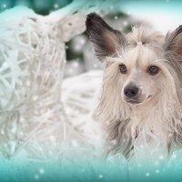 Маленький помощник Снежной Королевы :: Lika Shakhmatova
