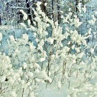 Пушистые украшения зимы. :: Aida10