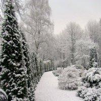 Туевая ограда :: Сергей Карачин