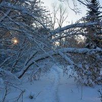 Утром был снег. :: Валерий Медведев