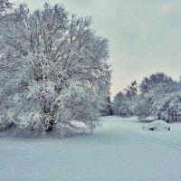 Зимние картинки :: Swetlana V