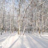Свет зимы белоснежной... :: Анна Владимировна