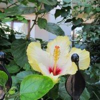 цветы Турции :: Елена Шаламова