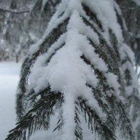 Мороз,снег и красота)) :: Алексей Кузнецов