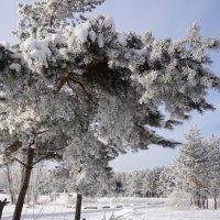 Мороз :: Наталия Григорьева